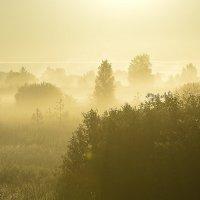 Утро туманное :: Сергей Жданов