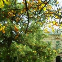 Осень в городе :: татьяна