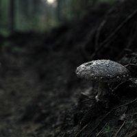 самый лучший гриб :: Дмитрий Тихомиров