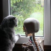Я тебя  кот предупреждал  за окном армагедец  ! :: Виталий  Селиванов