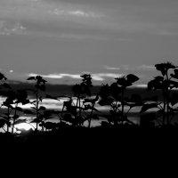 на закате дня :: Anrijs Slišāns