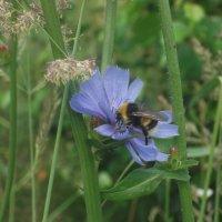 Собирание пыльцы :: Валерия