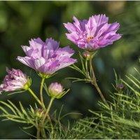 Цветы :: OKCAHA Валова