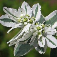 Оригинальное растение :: Татьяна Смоляниченко