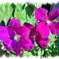 Слиянье воздуха и цвета в переплетении ветвей... :: Валентина ツ ღ✿ღ