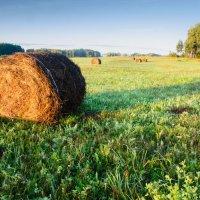 В поле :: Дмитрий Брошко