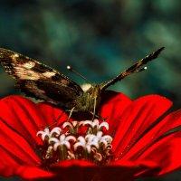 Сладкий нектар :: Наталья Мячикова