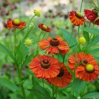 цветочки :: Лариса Батурова