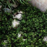 камни в траве :: Юрий