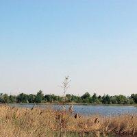 Озеро в черте города :: раиса Орловская