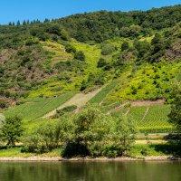 Знаменитые виноградники Мозеля :: Witalij Loewin