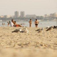 пляж :: Roamer Pon