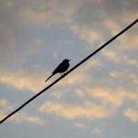 одинокая птичка :: Ваше имя Рамиль Гарипов