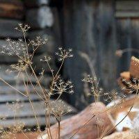 В полисаднике за забором :: Екатерина Торганская