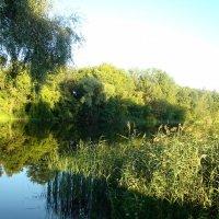 У озера :: марина ковшова