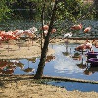 Берег фламинго :: Николай Кандауров