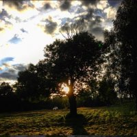 Деревьям тоже бывает одиноко... :: Viktory Fedorova