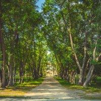 красивый вход из деревьев :: Света Кондрашова