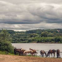 Ходят кони над рекою...ищут кони...водопою...)) :: Маry ...