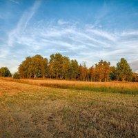 Вечером в поле... :: Александр Никитинский