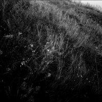 Чёрно-белый склон :: Николай Филоненко