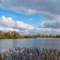 Осень на Разливе 3 :: Виталий