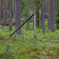 В лесу :: Константин