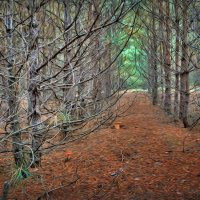 Сказочный лес... :: *MIRA* **