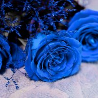 Розы от любимого... :: Ольга Мореходова