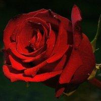 Царица флор :: Гриша  6х9 или 9х12