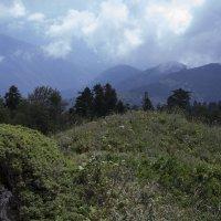 гора Мамзышха, Абхазия :: Valentina