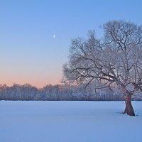 Одинокое дерево на Лугу :: Дубовцев Евгений