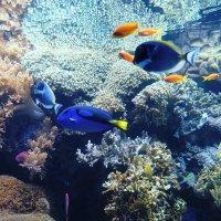 Коралловые рыбки :: Ольга Васильева