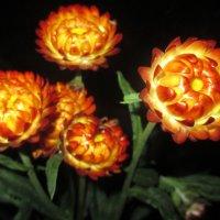 Красота сухоцветов. :: Valentina