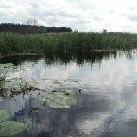 Может ведает река сколько слёз в облаках? :: Ольга Кривых