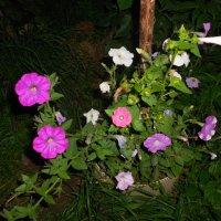 цветы :: Mary Коллар