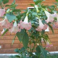 Неизвестный цветок (во весь рост) :: Надежда