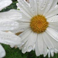 После дождя :: Валерия