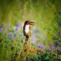 В райском саду :: Nikolay Volkov