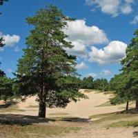 Парк в городе Сосновый Бор :: максим лыков