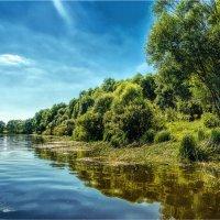 Днепровские затоки. :: Константин Ушмаев