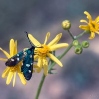 насекомое :: Sergey Bagach