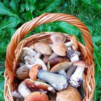 Подарок от леса :: Ольга