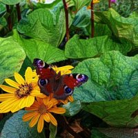 Про бабочку и цветок :: Nina Yudicheva