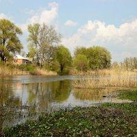 Весенний пейзаж. :: Валентина Домашкина