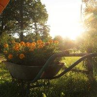 Солнечная телега :: Никита Тихонов