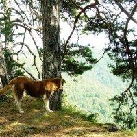 Собакам тоже нравятся Адыгейские гоы. Что-то ее заинтересовало :: татьяна