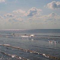 Море Белое. Август. :: Елена Перевозникова