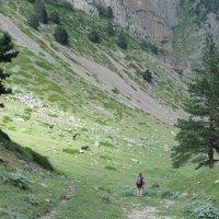 Турист и 3 лошади :: Виталий Купченко
