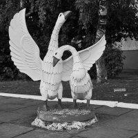 Гуси-лебеди :: Сергей Черепанов